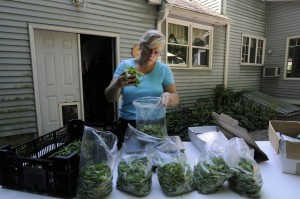 GLASTONBURY, CT; 7/25/2012: Brenda Sullivan grows vegetables in 20 raised beds behind her home in Glastonbury. Sullivan weights and bags arugula before she heads to a farmers' market to sell freshly cut greens. At her Thompson Street Farm, she grows leafy greens, tomatoes, lavender and herbs and sells them at two farmers markets. MICHAEL McANDREWS | mmcandrews@courant.com