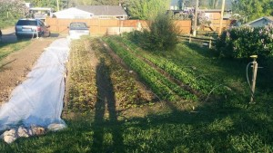 Brianna Growing vegetables In A Small Space.