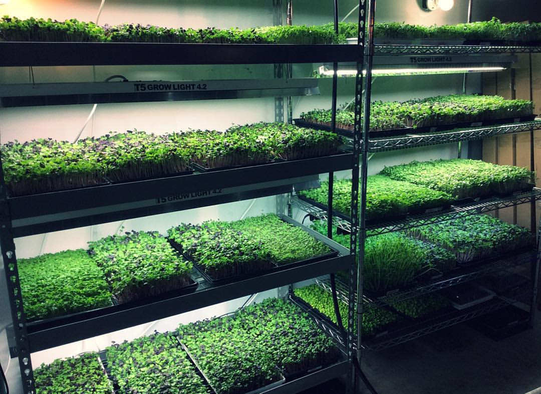 Q Amp A With Mary Ackley The Queen Of Microgreens Garden Hero