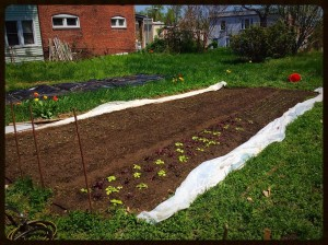 SF photo PPT Mary Ackley plot planted