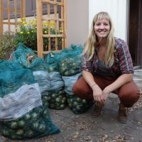Here's a Crop That Grows Itself – Onions